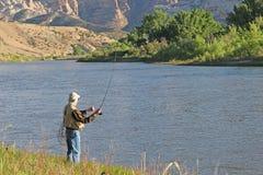 渔夫在绿河乐队的用假蝇钓鱼 免版税库存图片