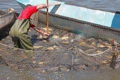 渔夫抓一条鱼 库存图片