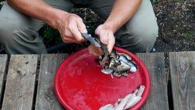 渔夫清洗与刀子的人新近地抓了鱼 影视素材