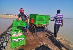 渔夫装载在岸的鱼箱子 免版税库存图片
