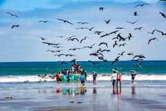 渔夫运载鱼容器给买家,追逐被鸟看 免版税图库摄影