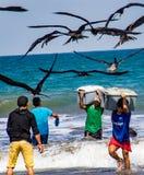渔夫运载鱼容器给买家,追逐被鸟看 库存照片