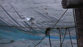渔夫降低拖网入海洋水,高知 影视素材