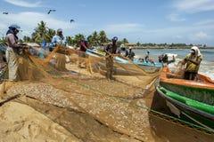 渔夫从他们的网的排序鱼在Negombo的海滩在斯里兰卡 库存照片