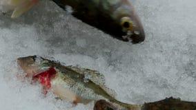渔栖息处在冬天 影视素材