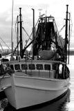 渔英属黄金海岸 库存图片