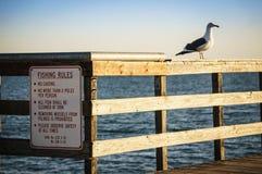 渔规则 库存图片