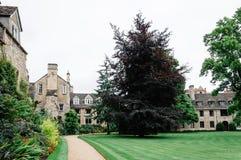 渥斯特学院在牛津 库存照片