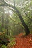 温和森林豪华的雨 库存图片