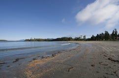 温和海滩长的雨林 免版税库存照片