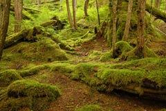 温和的雨林 免版税库存照片
