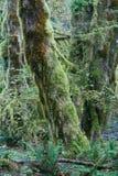 温和西北和平的雨林 库存照片