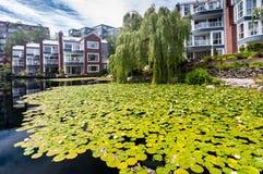 温哥华公寓大厦和池塘有荷花的 免版税库存图片