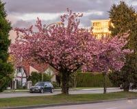 温哥华加拿大-在第16条大道的2017年4月27日,看法和石南花街道 免版税库存照片