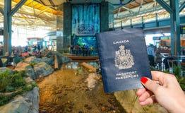 温哥华国际机场- 2017年4月11日, :在温哥华国际机场休息室递持一本加拿大护照 冷杉 免版税库存图片