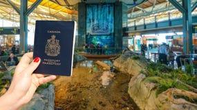 温哥华国际机场- 2017年4月11日, :在温哥华国际机场休息室递持一本加拿大护照 冷杉 库存图片