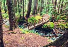 温哥华森林 免版税库存照片