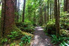 温哥华森林 库存图片