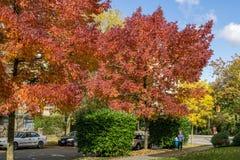 温哥华,加拿大- 2017年10月1日:第12条大道和灰街道的交叉点在一晴朗的秋天天上色了树 库存照片