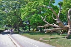 史丹利公园的,温哥华加拿大骑自行车的人 免版税库存图片