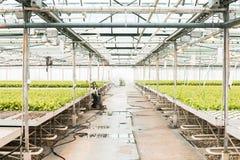 温室和绿色菜 免版税图库摄影