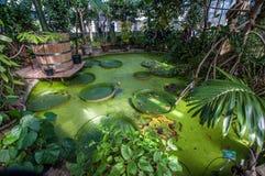 温室在植物园里在哥本哈根 库存照片