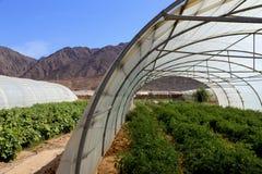 温室在沙漠 免版税库存图片