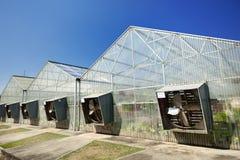 温室在蓝天下 免版税库存图片