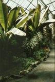 温室在里斯本,葡萄牙 免版税库存图片