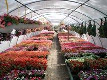 温室植物春天 图库摄影