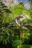 温室温室的热带植物在Kew庭院Southwes里 图库摄影