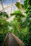 温室温室的热带植物在Kew庭院Southwes里 库存图片