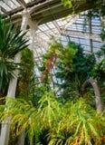 温室温室的热带植物在Kew庭院Southwes里 免版税库存照片