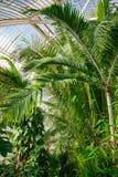 温室温室的热带植物在Kew庭院Southwes里 免版税图库摄影