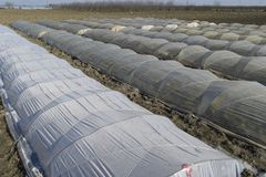 温室由聚合物影片制成 在庭院gre的早期的春天 免版税库存照片