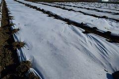 温室由聚合物影片制成 早期的春天自庭院温室 免版税库存图片