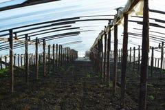 温室由聚合物影片制成 早期的春天自庭院温室 图库摄影