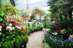 温室的植物 免版税库存照片