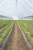 温室种子 库存照片