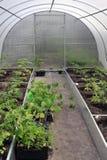 温室种植园 库存照片