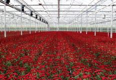 温室苗圃 免版税图库摄影