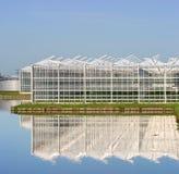 温室苗圃 库存图片