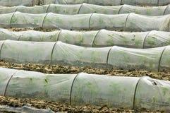 温室苗圃 免版税库存照片