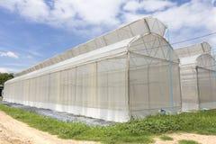 温室蓝天背景的瓜农场 免版税库存图片