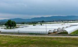 温室,室内种田 免版税图库摄影