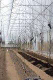 温室,播种季节 免版税库存照片