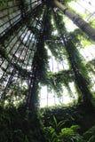 温室 库存照片