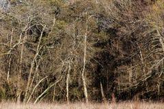 温带林在冬天 免版税库存照片