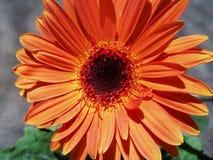 温暖出价橙色花软的春天 库存图片
