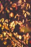 温暖和充满活力的秋天背景,来通过wi的太阳光 库存照片